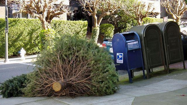 Odvoz vianočných stromčekov je v plnom prúde