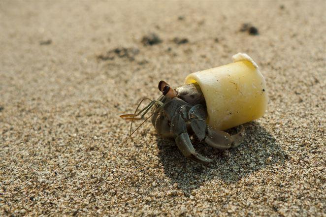Nová štúdia: Látky v plastovom odpade menia správanie živočíchov