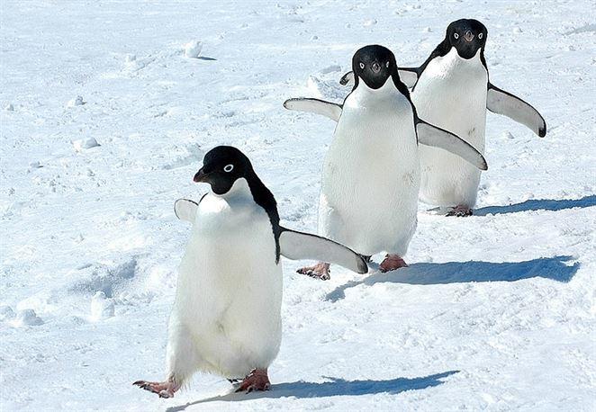 Mikroplasty boli prvýkrát objavené v potravinovom reťazci v Antarktíde