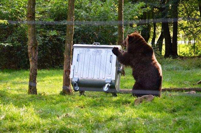 Obec nemá problém s medveďmi. Pokutu za nekryté kontajnery dostala