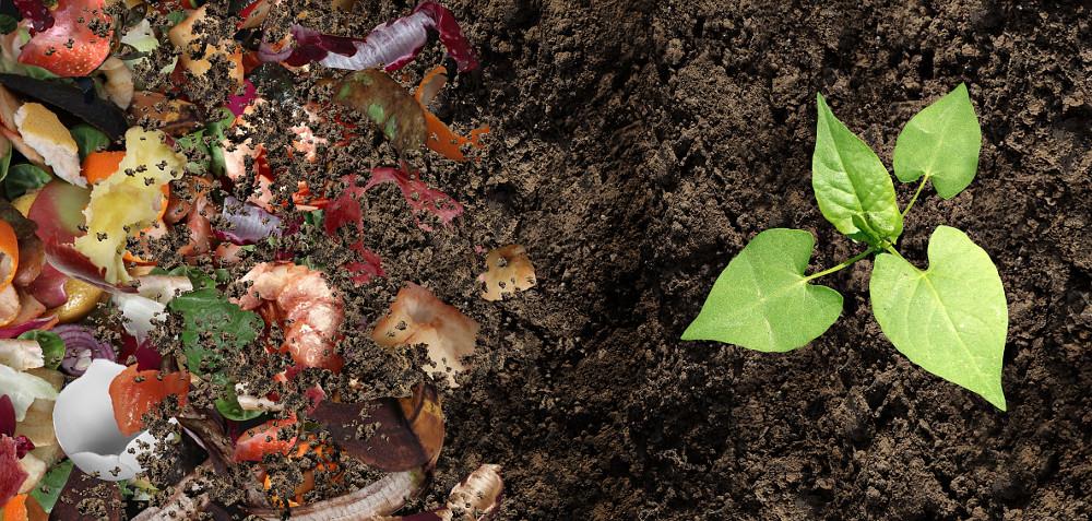Je ekologickejšie používať kompost ako hnojivo alebo ukladať na skládku?