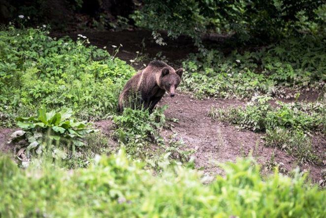 Vo Vysokých Tatrách majú slabo zabezpečený odpad, ŠOP podáva podnet na SIŽP