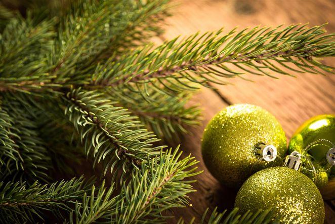 Z vianočných stromčekov kompost v Košiciach, palivo v Bratislave
