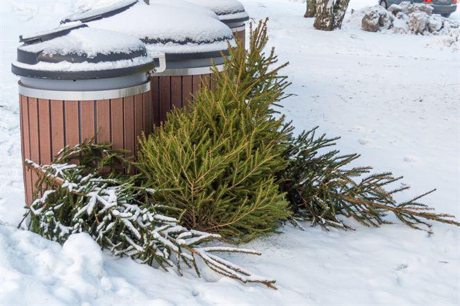 Zero waste technológia recykluje vianočné stromčeky, stanú sa z nich sladidlá a farby