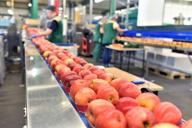 Ovocie a zelenina vydržia dlhšie čerstvé vďaka filtru, ktorý zachytáva etén