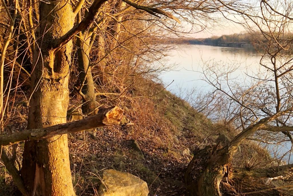 Chránené lesy pri Dunaji sa dočkali veľkého upratovania. Zapojiť sa môže každý